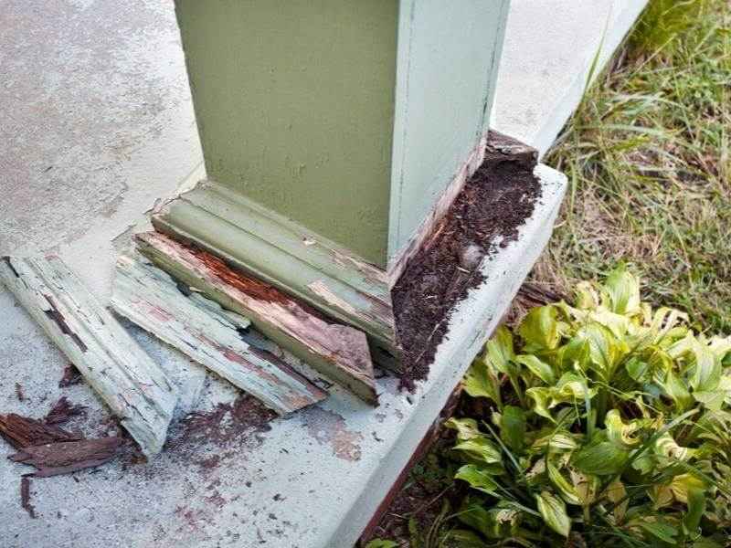 Repaint Your House to Prevent Termites