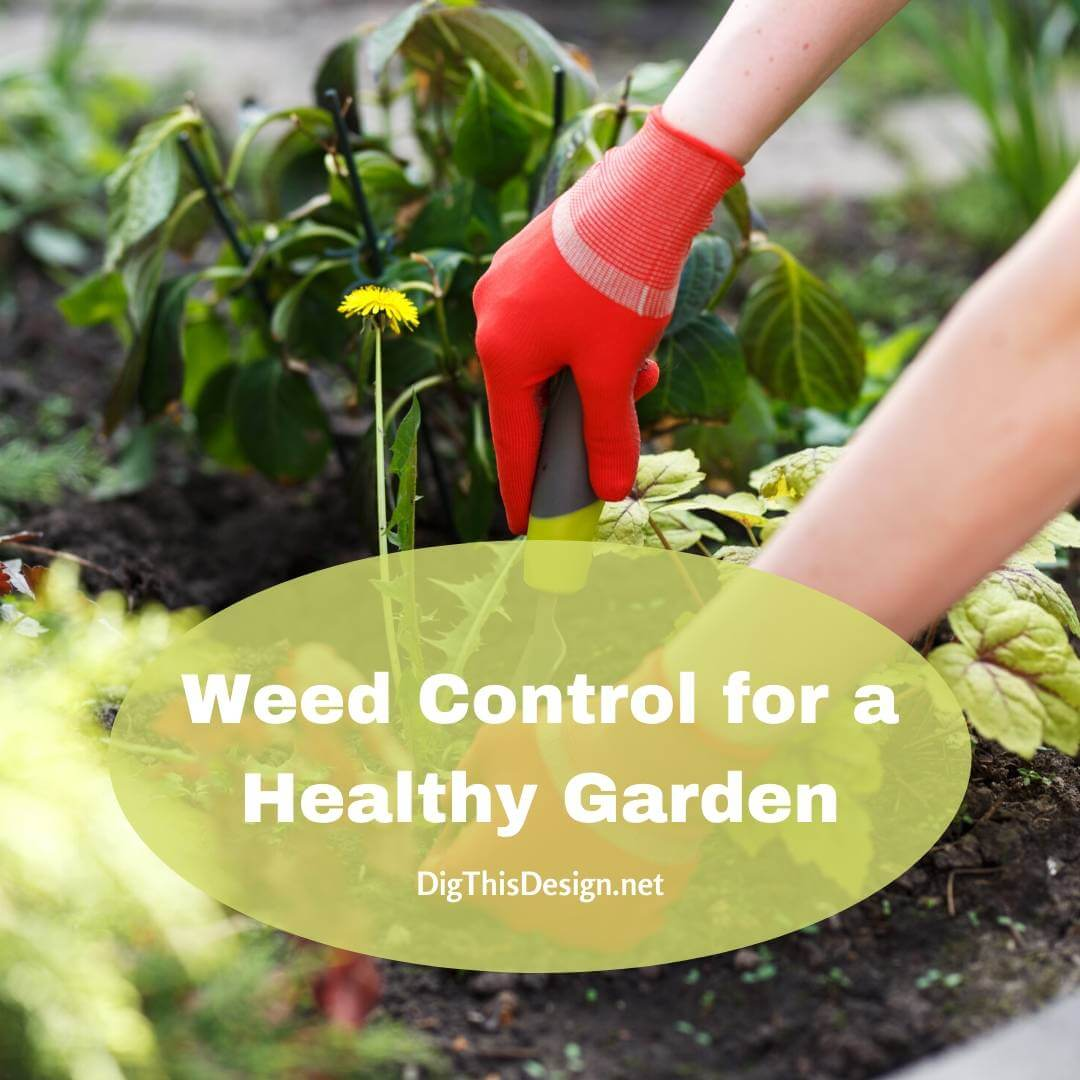 The Importance of Weed Control for a Healthy Garden