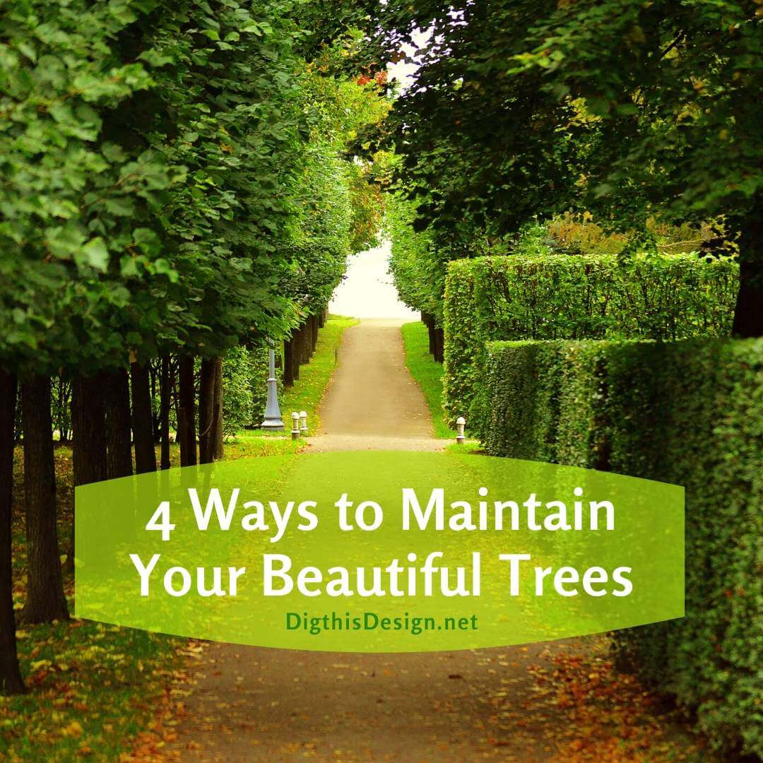 4 Ways to Maintain Your Beautiful Trees