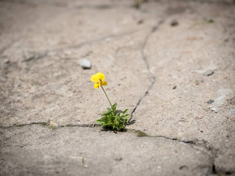 Breaking up Concrete with Pansy