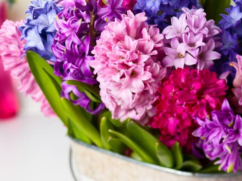 Symbolism of Flowers - Hyancinths