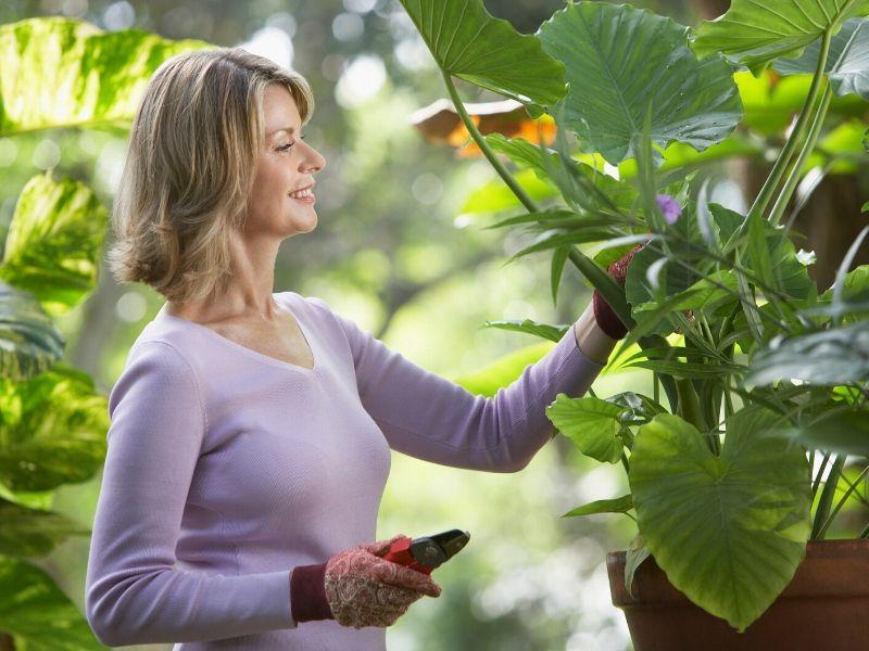 Home gardening trends