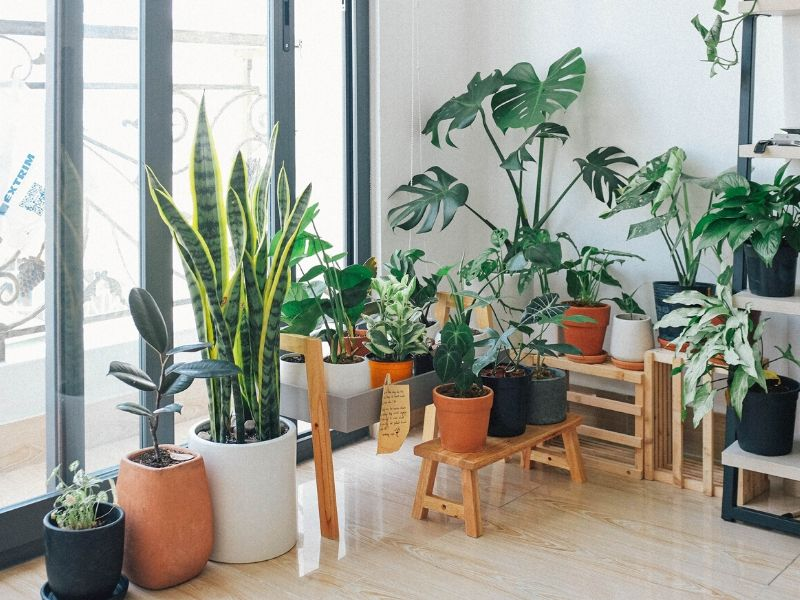 Big house plants.