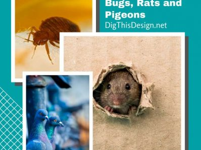 Get Rid Of Bed Bugs, Rats and Pigeons