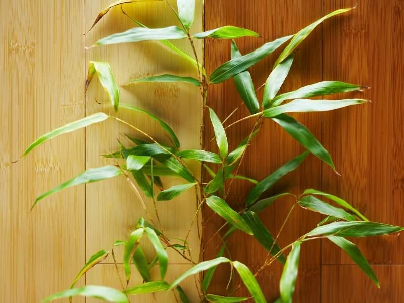 Bamboo flooring Interior Design Trends in 2020