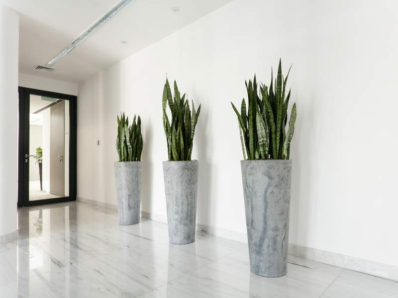 Office entrance with green space
