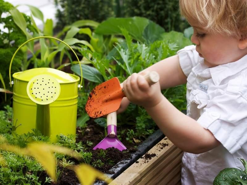 Tips to Creating a Home Vegetable Garden