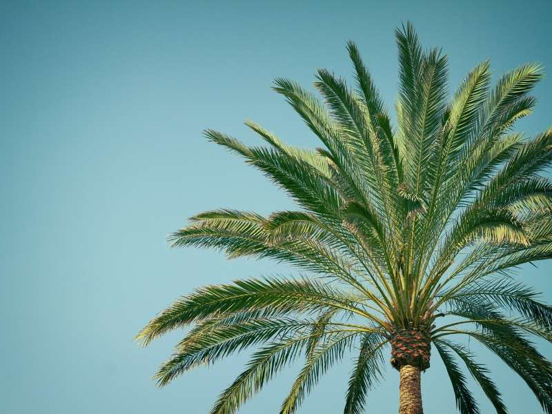 Learn About the Most Beautiful Types of Palm Trees