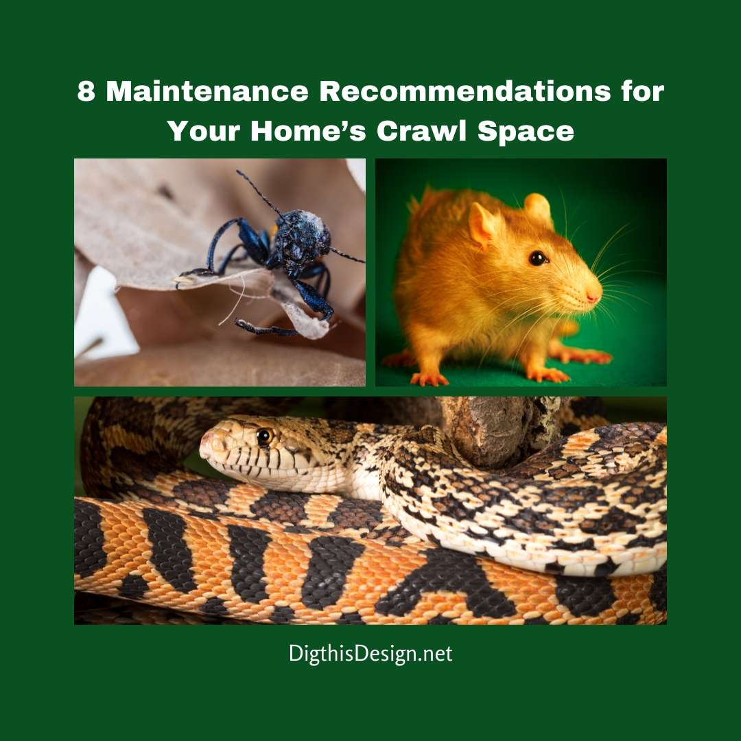 8 Maintenance Recommendations for Your Home's Crawl Space