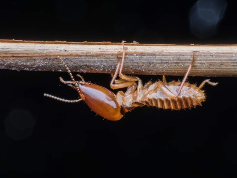 6 Tips to Identify & Eliminate Termites from Your Home
