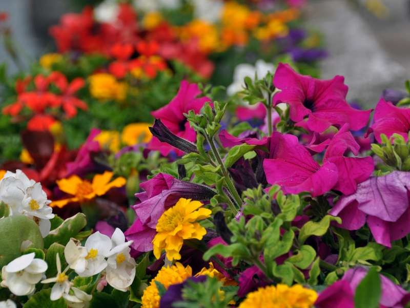 Plant Flower Beds to Add Color