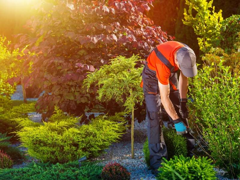 4 Reasons for Hiring a Landscaping Company