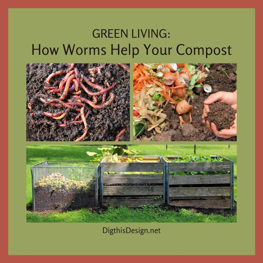 How Worms Help Your Compost
