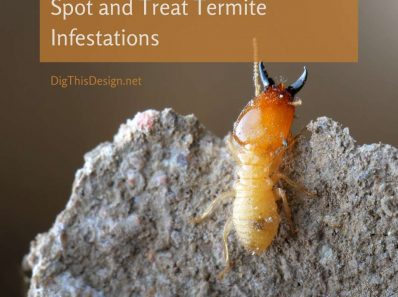 Spot and Treat Termite Infestations in Your Home