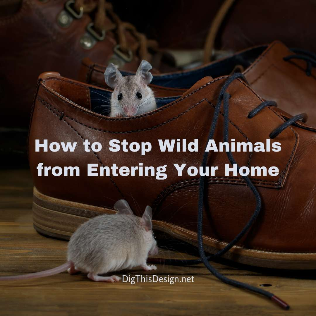 Stop Wild Animals from Entering Your Home