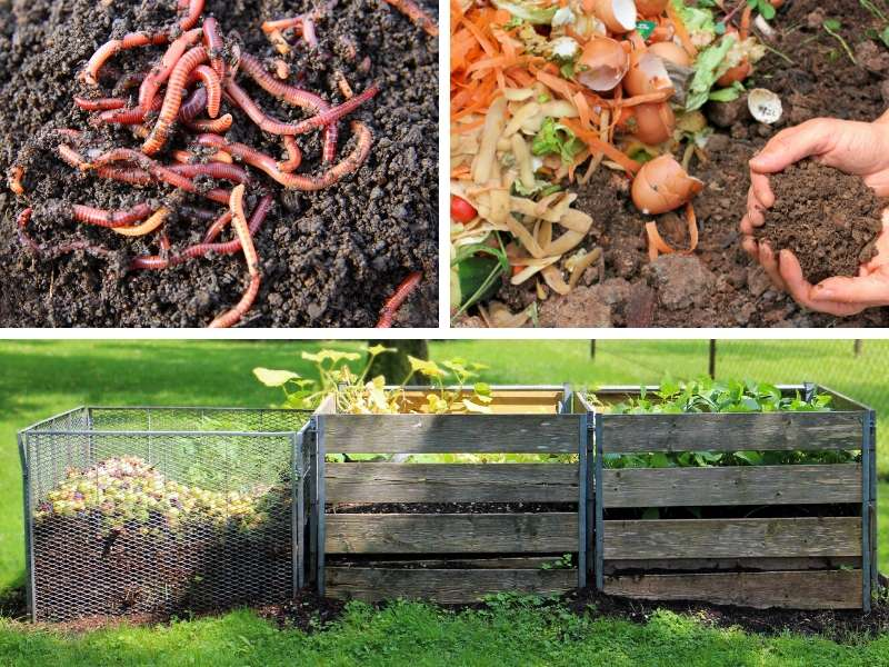 6 Ways Worms Help Your Compost