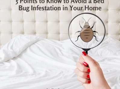 5 Points to Know to Avoid a Bed Bug Infestation in Your Home