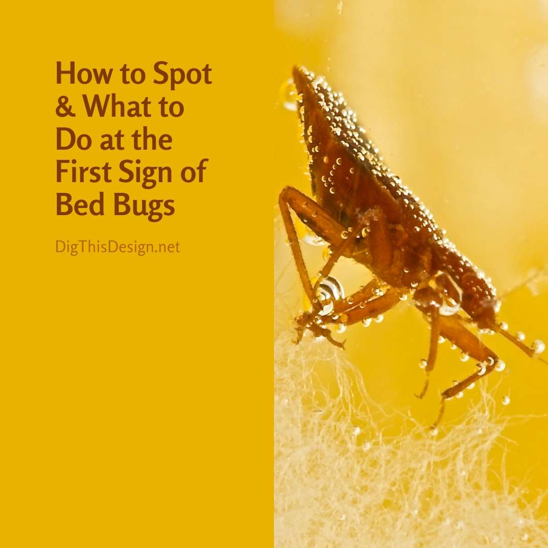 How to Spot & What to Do at the First Sign of Bed Bugs in Your Home