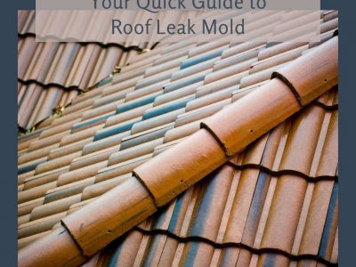 Your Quick Guide to Roof Leak Mold
