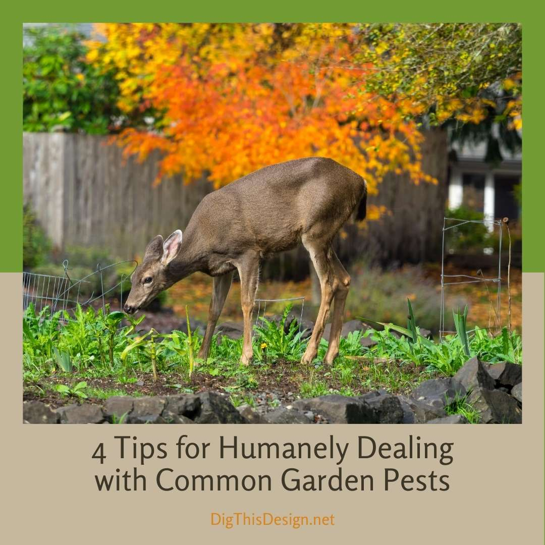 4 Tips for Humanely Dealing with Common Garden Pests