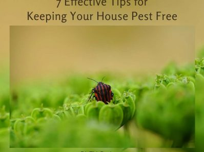7 Effective Tips for Keeping Your House Pest Free