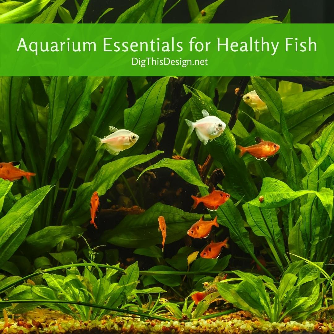 Aquarium Essentials for Healthy Fish