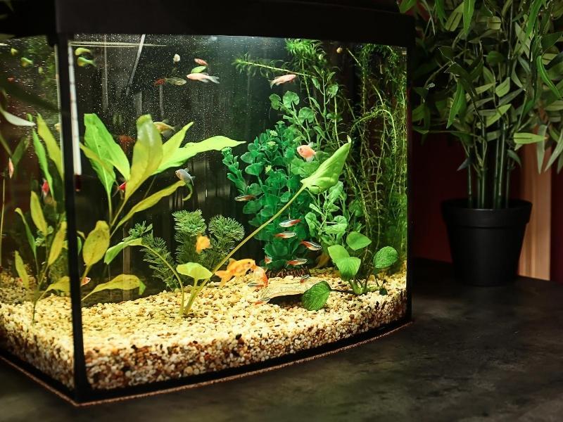 Aquarium Essentials for Healthy Fish