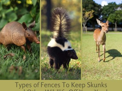 Keep Skunks and Other Wildlife Off Your Yard