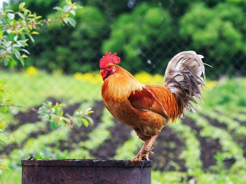 4 Tips to Turn Your Backyard into a DIY Farm