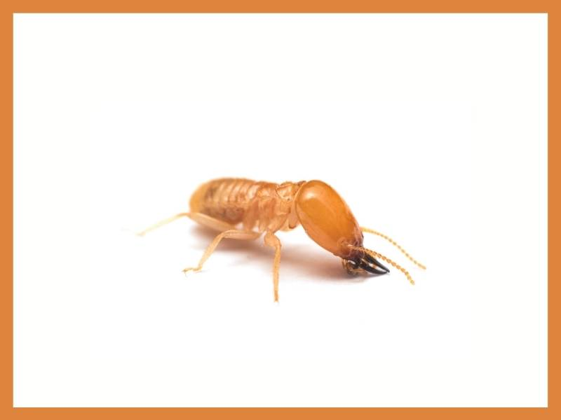 Warning Signs of Termite Infestation