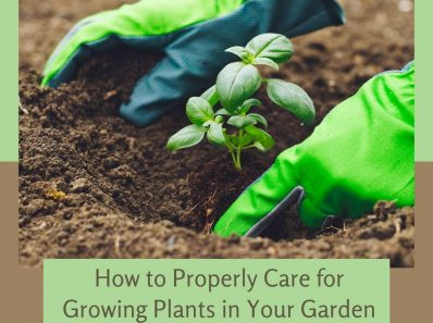 How to Properly Care for Growing Plants in Your Garden