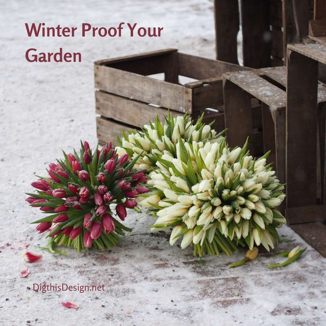 Winter Proof Your Garden