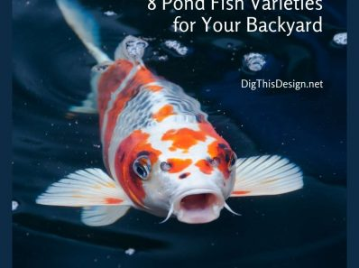 8 Pond Fish Varieties for Your Backyard