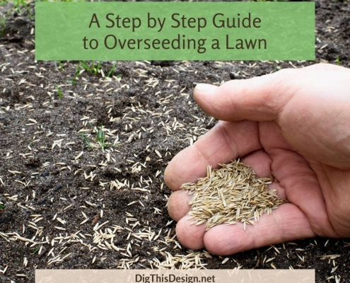 A Step by Step Guide to Overseeding a Lawn