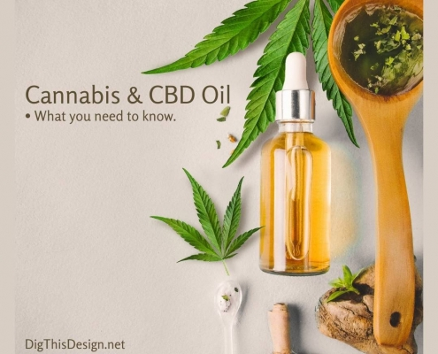 Cannabis and CBD Oil What You Need to Know