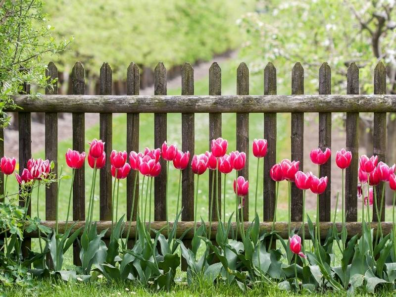 How to Get a Quirky Fence for Your Garden