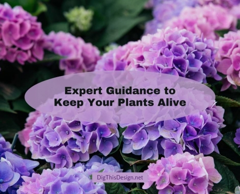 Expert Guidance to Keep Your Plants Alive