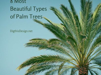 8 Most Beautiful Types of Palm Trees