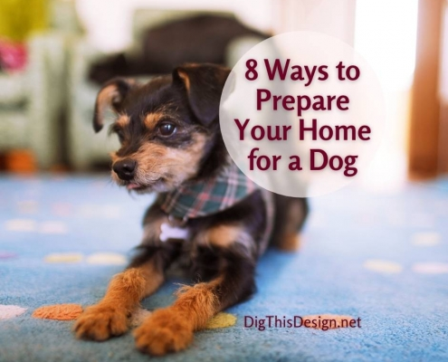 8 ways to prepare your home for a dog