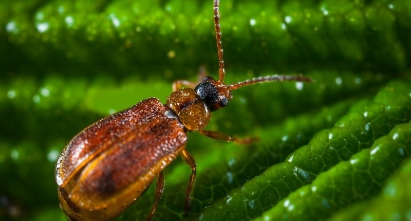 5 Household Bugs that Come Out in the Summertime