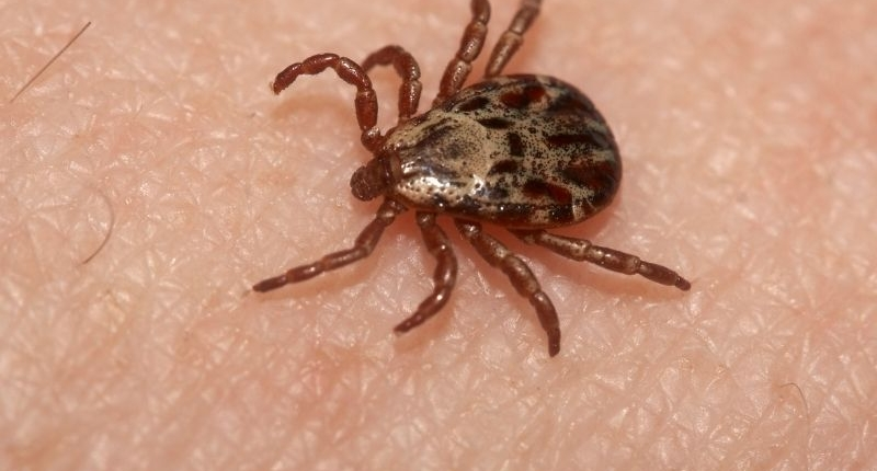 5 Household Bugs that Come Out in the Summertime -Tick