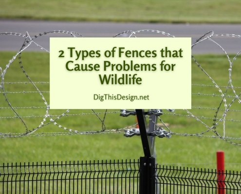 2 Types of Fences that Cause Problems for Wildlife