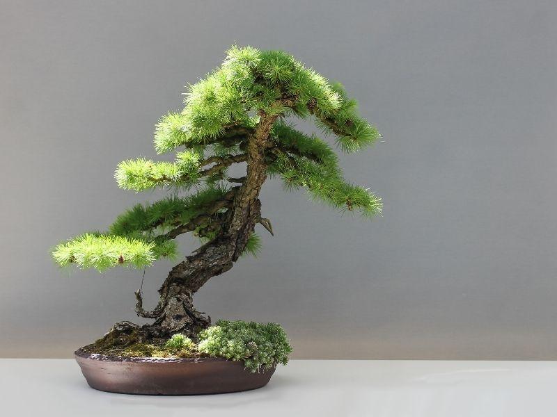 3 Luxurious Decor Ideas for an Empty Wall - Bonsai Tree