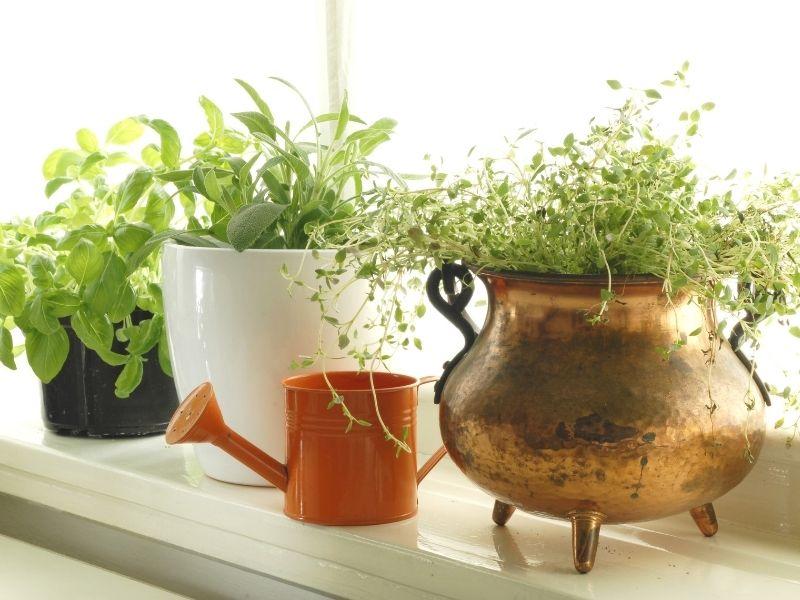4 Kitchen Design Hacks To Support A Healthy Lifestyle - herb garden in window sill.
