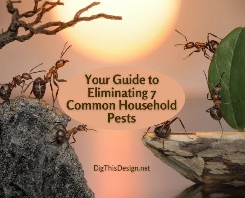 Your Guide to Eliminating 7 Common Household Pests