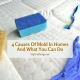 4 Causes Of Mold In Homes And What You Can Do