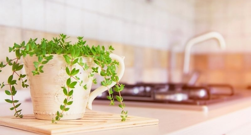 Green plant in planter on countertop.