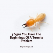 5 Signs You Have The Beginnings Of A Termite Problem