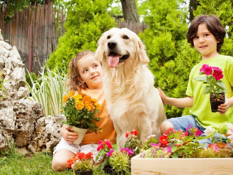 The correct plants and fertilizer