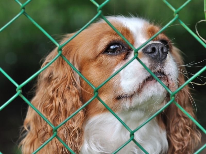 7 Ways To Make Your Backyard Dog-Friendly - cute dog with green chain link fence.